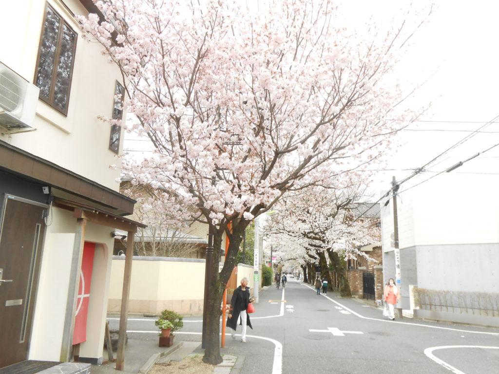 桜 センダイヤ